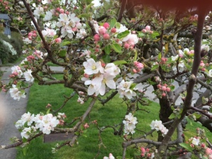 Appletree5.2015